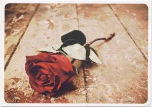 postcard finland red rose