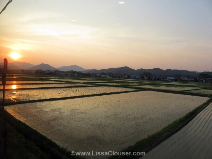 sunset over rice fields in japan